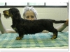 slideshow-dachshunds-02