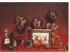 slideshow-dachshunds-04