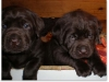 slideshow-puppies_past-01