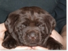 slideshow-puppies_past-03