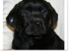 slideshow-puppies_past-12
